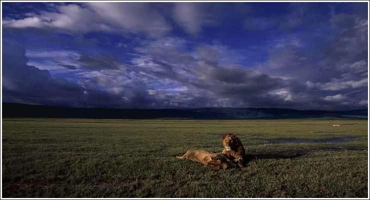 Løver på slettene